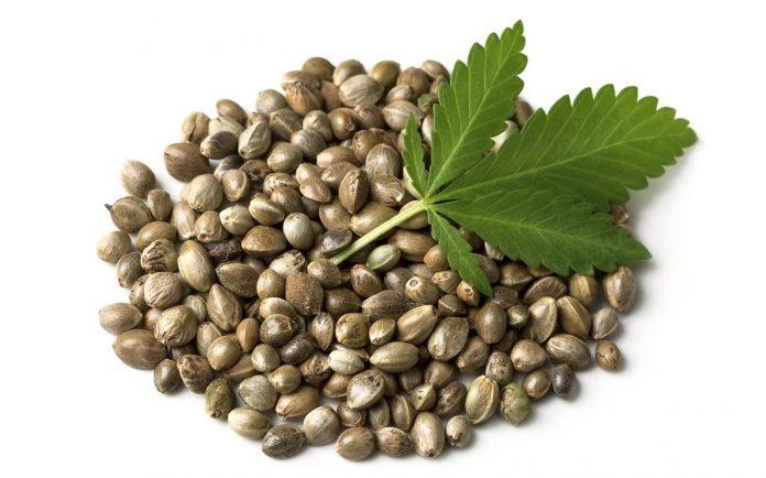 Nasiona Marihuany